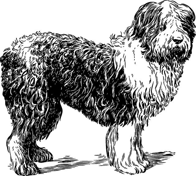 sheepdog-46841_640